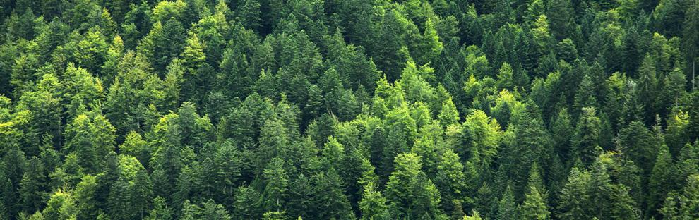 Holzprodukte